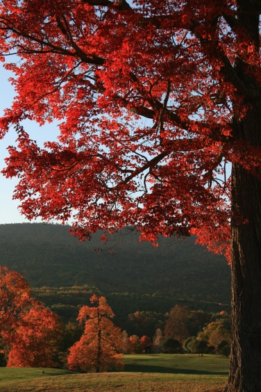 Fall Leaves Annette Naber Emerald Mountain Sanctuary